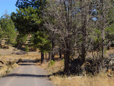 Foxglenn Trail